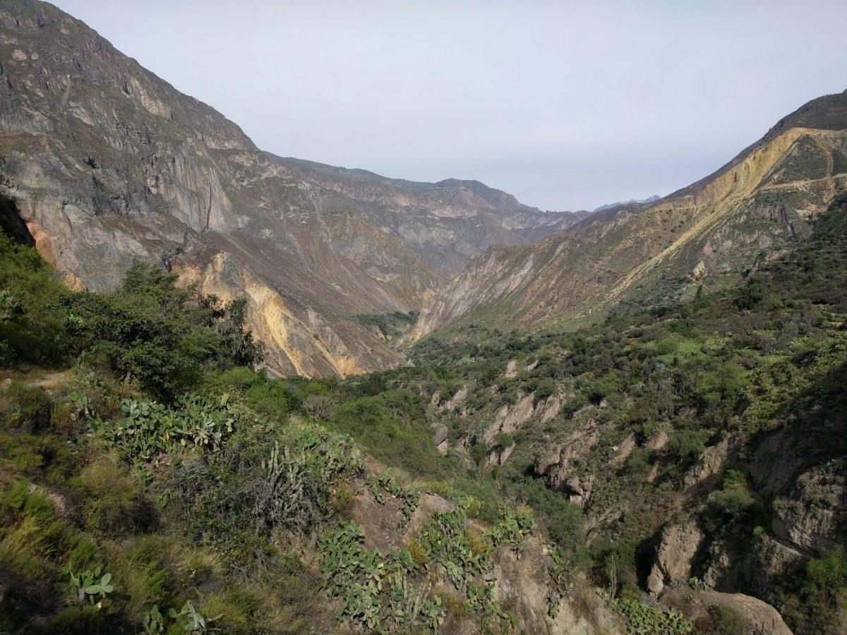 Pérou: Arequipa et le canyon Colca