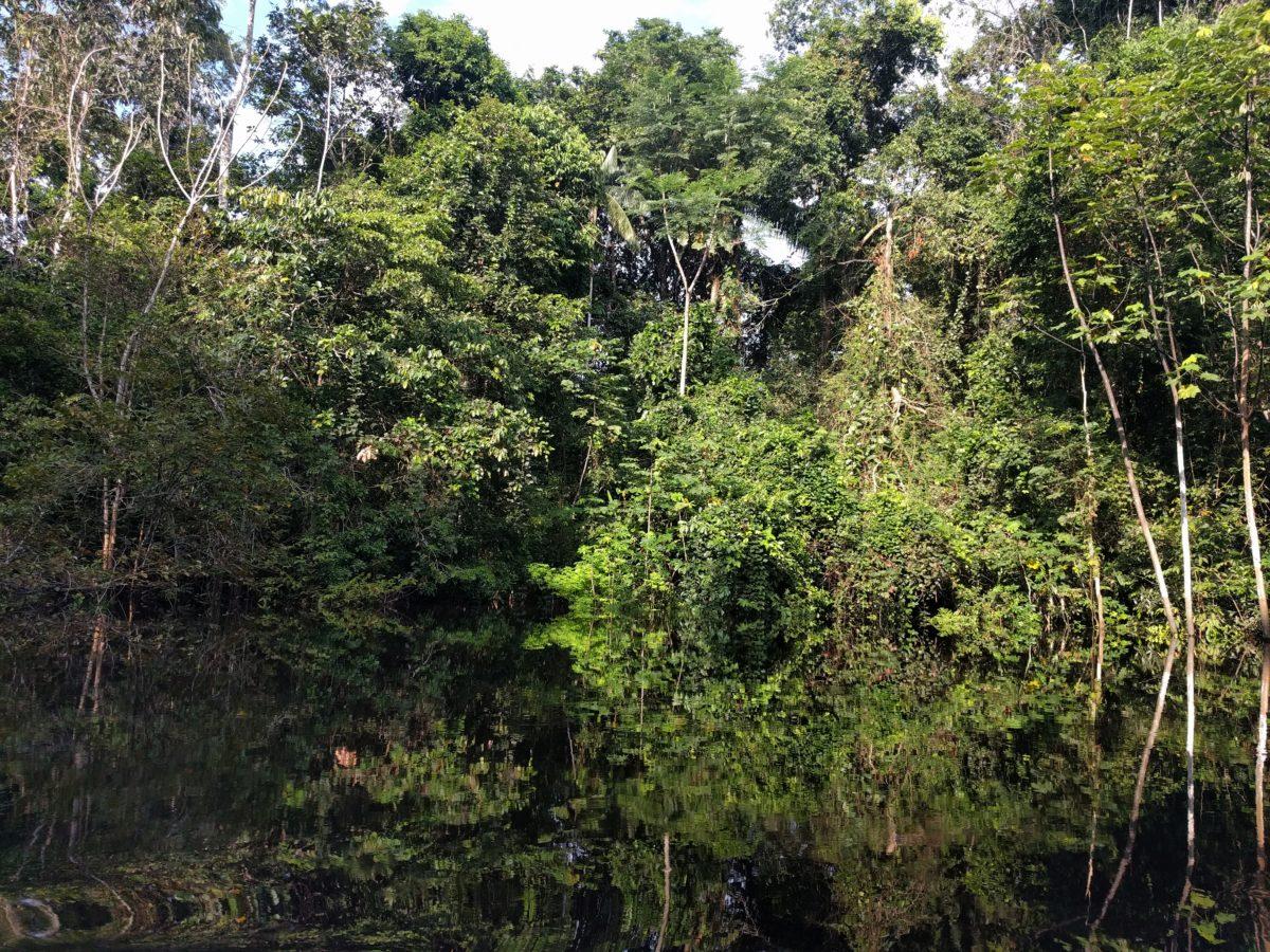 Pérou: Cinq jours dans la forêt amazonienne
